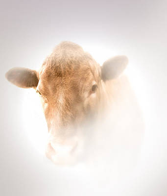 Photograph - Red Heifer by Valerie Anne Kelly