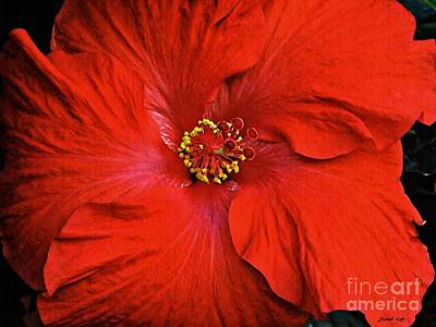 Photograph - Red Hibiscus 2 by Sarah Loft