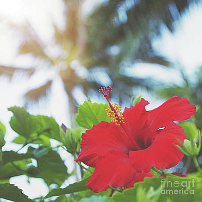 Photograph - Red Hibiscus by Cindy Garber Iverson