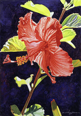 Florals Royalty-Free and Rights-Managed Images - Red Hibiscus by David Lloyd Glover