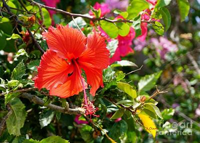 Hibiscus Painting - Red Hibiscus In Bright Light by John Clark