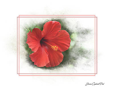 Photograph - Red Hibiscus by Joann Copeland-Paul