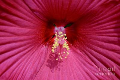 Photograph - Red Hibiscus Macro by Jeannie Rhode