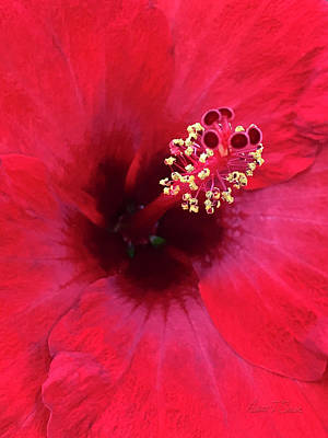 Photograph - Red Hibiscus - O'keeffe Style by Robert J Sadler