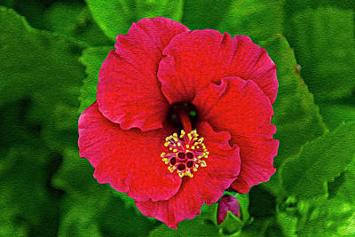 Mark Myhaver Rights Managed Images - Red Hibiscus op12 Royalty-Free Image by Mark Myhaver