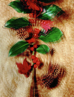 Red Holly Spinning Art Print