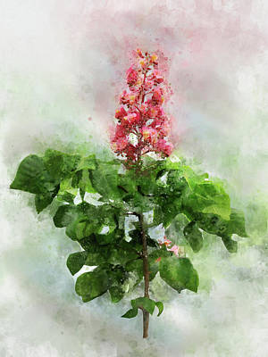 Painterly Drawing - Red Horse Chestnut, Aesculus X Carnea by Elena Oglezneva