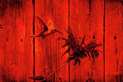 Digital Art - Red Hummingbird by David Stasiak