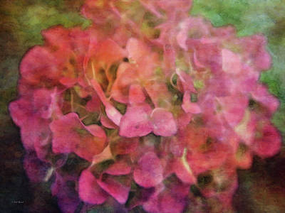 Photograph - Red Hydrangea 2421 Idp_2 by Steven Ward