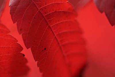 Photograph - Red I by Nancy  Coelho