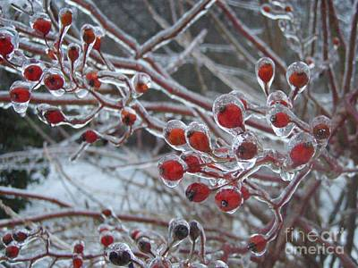 Connecticut Winter Photograph - Red Ice Berries by Kristine Nora