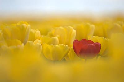 Red In Yellow L085 Art Print by Yoshiki Nakamura