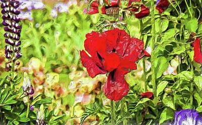 Photograph - Red Iris In Bloom by Thom Zehrfeld