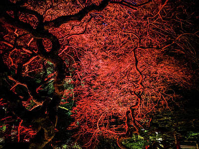 Abstract Shapes Janice Austin Royalty Free Images - Red Japanese maple at night Royalty-Free Image by Michael Bessler