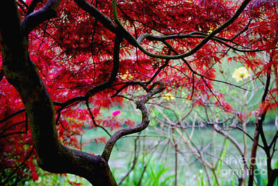 Art Print featuring the photograph Red Japanese Maple by Nancy Bradley