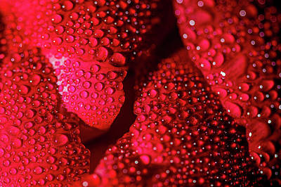Photograph - Red by Jay Stockhaus