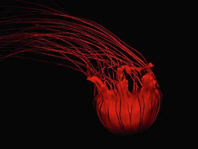 Red Jellyfish Art Print by Denise Keegan Frawley
