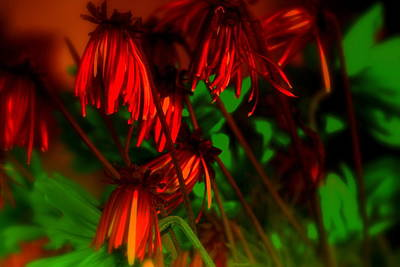Photograph - Red  by Julie Lueders