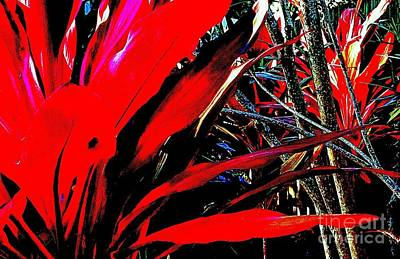 Photograph - Red Jungle by Rachel Hannah
