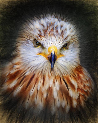 Digital Art - Red Kite by Ian Merton