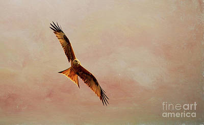 Painterly Photograph - Red Kite. by Robert Brown
