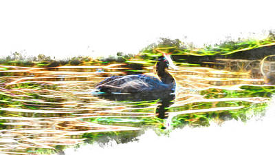 Digital Art - Red-knobbed Coot On A Dam by Petrus Bester