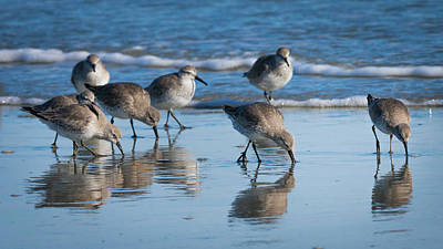 Photograph - Red Knots by Van Sutherland