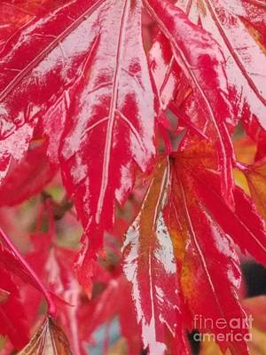 Photograph - Red Leaf Abstract by Maria Urso