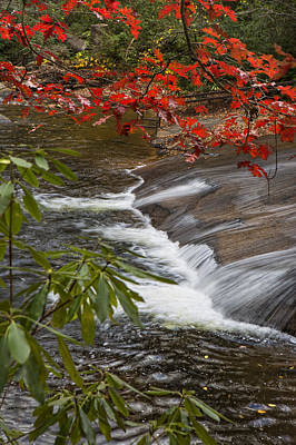 Red Leaf Falls Art Print