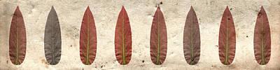 Photograph - Red Leaf Horizontal by Sumit Mehndiratta