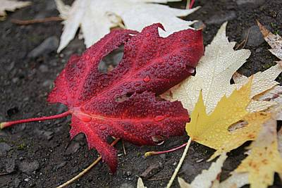 Photograph - Red Leaf In The Road by Katie Wing Vigil