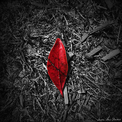 Photograph - Red Leaf by Iowan Stone-Flowers