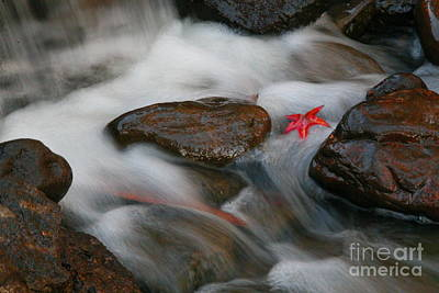 Photograph - Red Leaf by Jonathan Harper