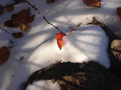 Red Leaf Art Print by Marilynne Bull
