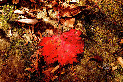 Print featuring the photograph Red Leaf by Meta Gatschenberger