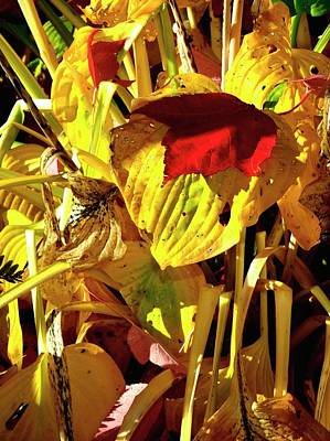 Photograph - Red Leaf Resting by Jerry Sodorff