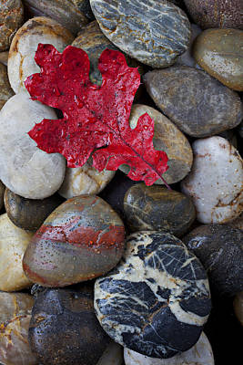 Rock Wall Art - Photograph - Red Leaf Wet Stones by Garry Gay