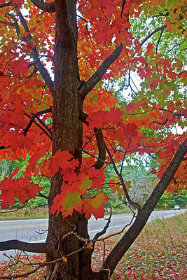 Photograph - Red-leaved Tree On Trail To North Beach Park In Ottawa County, Michigan by Ruth Hager