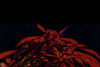 Digital Art - Red Leaves Abstract by Bill Posner