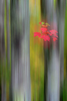 Photograph - Red Leaves - Abstract by Gary Lengyel
