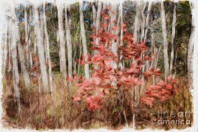 Photograph - Red Leaves Among Birch Trees by Marcia Lee Jones