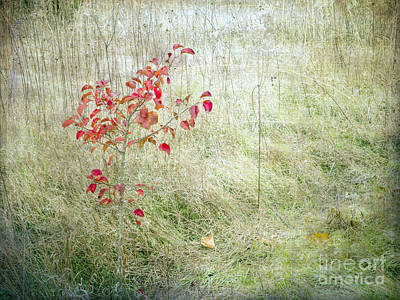 Photograph - Red Leaves Amongst Grass by Tamara Becker