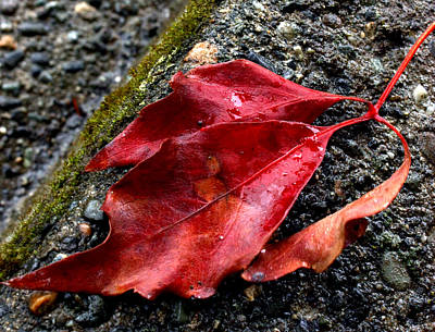 Photograph - Red Leaves And Concrete by Barbara  White