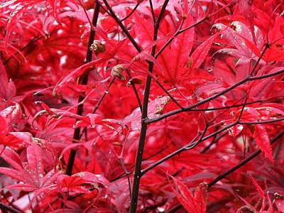 Red Leaves And Stems 2 Pd Art Print by Lyle Crump