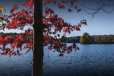 Photograph - Red Leaves And Tree Trunk In Autumn by Randall Nyhof