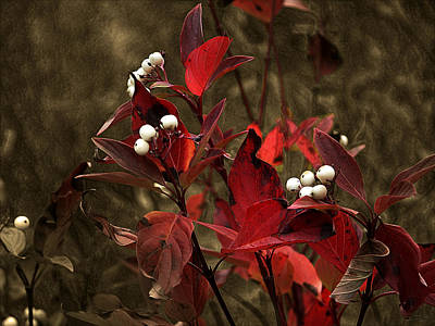 Digital Art - Red Leaves And White Berries  by Stuart Turnbull