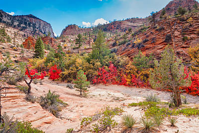Nature Photograph - Red Leaves At Zion National Park by John M Bailey