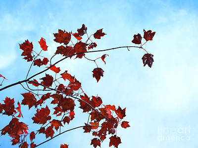 Photograph - Red Leaves Blue Sky Photograph by Kristen Fox