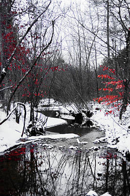 Photograph - Red Leaves By The Stream by Parker Cunningham