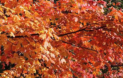 Red Leaves Art Print by Ellie Waligurski